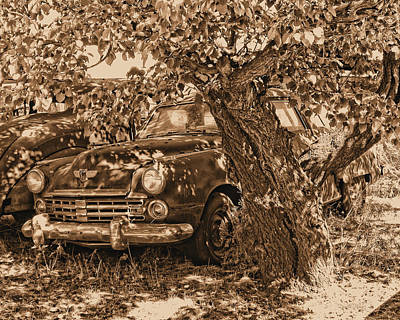 Photograph - Shady Stude Sepia Photo by David King