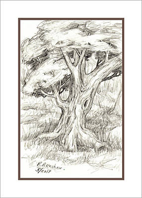 Drawing - Shady Tree by Ruth Renshaw