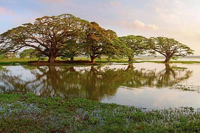 Shady Tropical Trees By The Lake, Sri Lanka Art Print by Lukasz Szczepanski