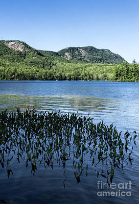 Photograph - Shagg Pond With Bald Mtn And Speckled Mtn, Woodstock Me #60623-24 by John Bald
