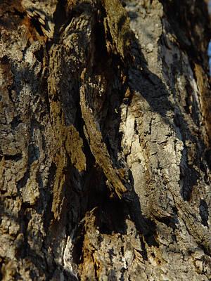Cummington Photograph - Shaggy Bark by Rosemary Wessel
