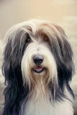 Photograph - Shaggy Dog by Ethiriel Photography