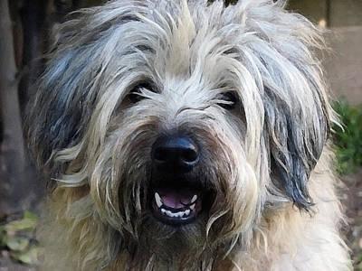 Terrier Digital Art - Shaggy Maggie by Lisa S Baker
