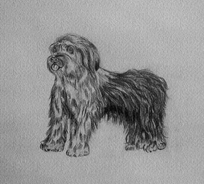 Sheepdog Drawing - Shaggy by Ramon Bendita