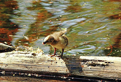 Photograph - Shake It Off I by Debbie Oppermann