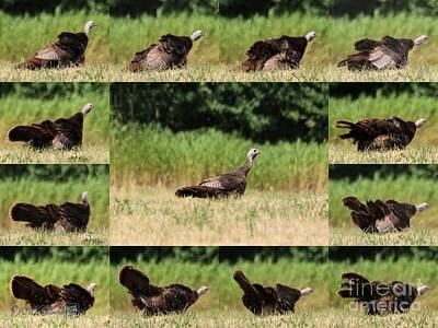 Photograph - Shake It Off by J McCombie