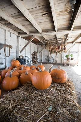 Photograph - Shaker Farm by Patricia Dennis