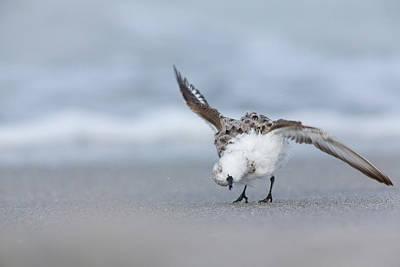 Photograph - Shaking Off by David Watkins