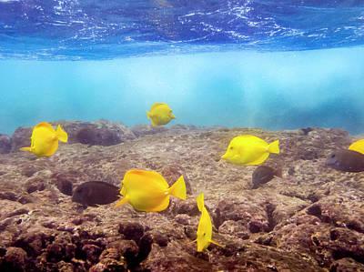 Photograph - Shallow Fish by Daniel Murphy