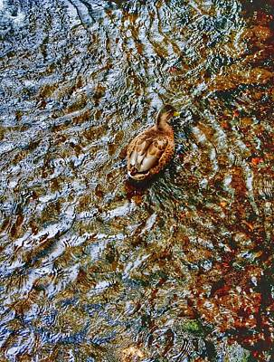 Photograph - Shallow Water by Isabella F Abbie Shores FRSA