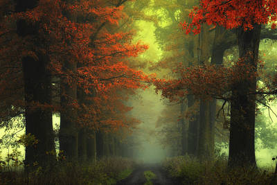 Of Trees Photograph -  Shaman's Road On The Other Side by Janek Sedlar