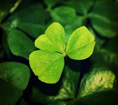 Photograph - Shamrock by Cathie Tyler