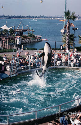 Photograph - Shamu The Orca Sea World San Diego 1967 by California Views Mr Pat Hathaway Archives