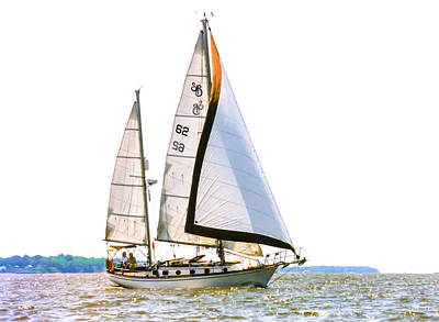 Shannon 38 Kittiwake On Chesapeake Bay Art Print