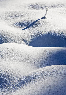 Windblown Photograph - Shapes Of Winter by Mike  Dawson