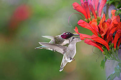 Photograph - Shared Delight by Lynn Bauer