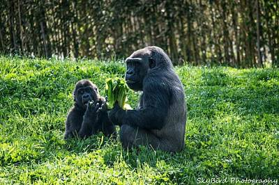 Pittsburgh Zoo Photograph - Sharing A Snack  by Megan Miller