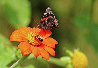 Photograph - Sharing The Nectar by Debbie Oppermann