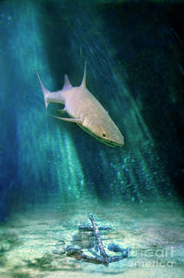 Photograph - Shark And Anchor by Jill Battaglia