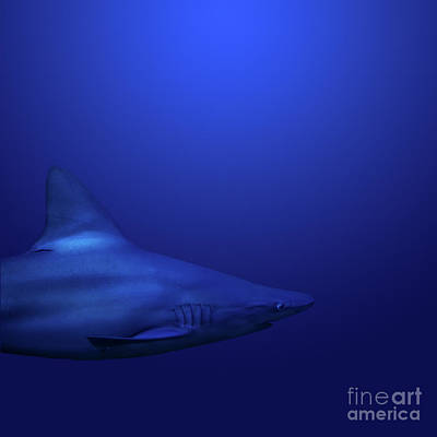 Photograph - Shark by Andrea Silies