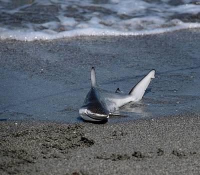 Photograph - Shark Bait by Jenny Regan