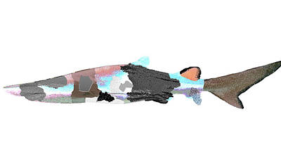 Beaver Mixed Media - Shark In Textured Multiple Colorful Patches In Shark Series One by I'lona Tunnel