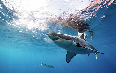 Hammerhead Shark Photograph - Shark Rays by Shane Linke