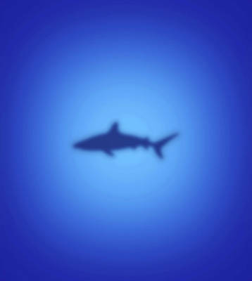 Digital Art - Shark by Steve Ball