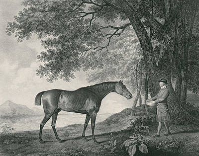 Horse Drawing - Sharke by George Stubbs
