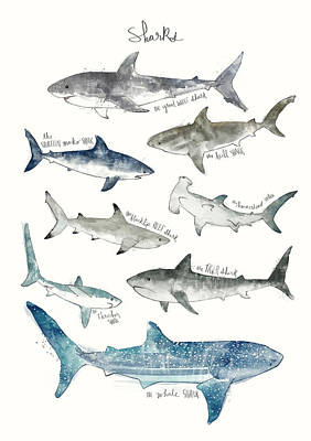 Great White Shark Painting - Sharks by Amy Hamilton