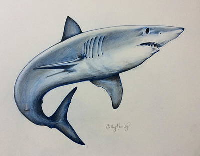 Drawing - Shark by Catherine Howley