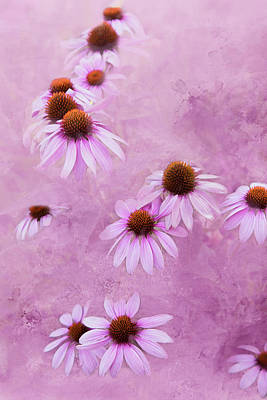 Sharon's Coneflowers Art Print