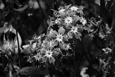 Photograph - Sharp Petal Flowers by Sumit Mehndiratta