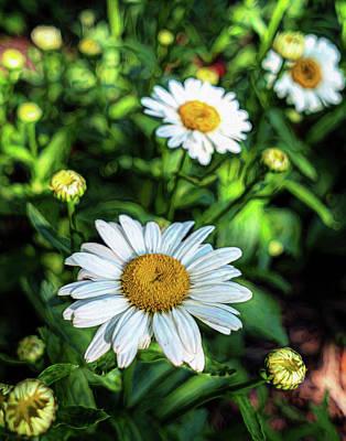 Photograph - Shasta Daisy by Robert FERD Frank