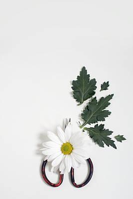 Photograph - Shasta Daisy Still Life by Di Kerpan