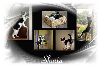 Photograph - Shasta by Joyce Dickens