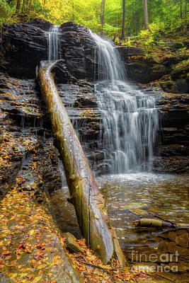 Photograph - Shawnee Falls Ricketts Glen by Jerry Fornarotto