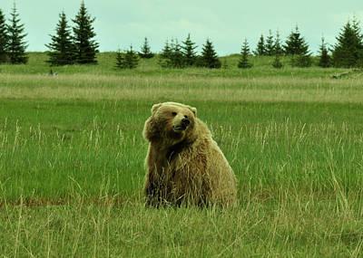 Yellowstone Digital Art - She Is No Teddy Bear by Dennis Blum