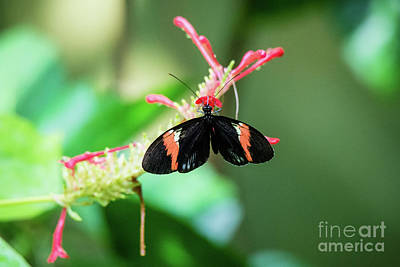 Photograph - She Likes The Color Red by Ed Taylor
