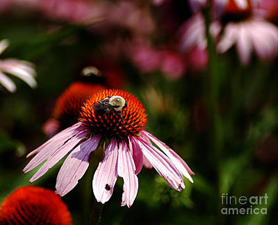 Photograph - She Loves Bee She Loves Bee Not by Clayton Bruster