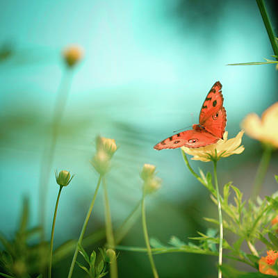 Butterfly Flowers Photograph - She Rests In Beauty by Patricia Ramos