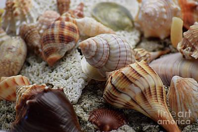 She Sells Sea Shells Art Print