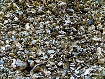 Photograph - She Sells Seashells by Tim Townsend