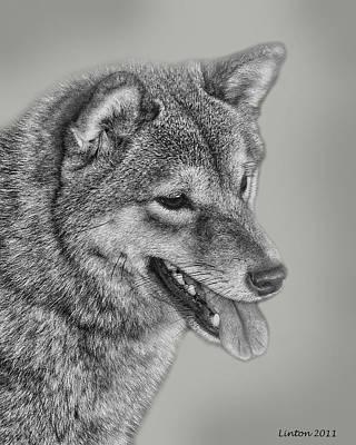 Akc Digital Art - Sheba Inu  by Larry Linton