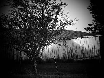 Shed  And Tree Art Print by Michael L Kimble