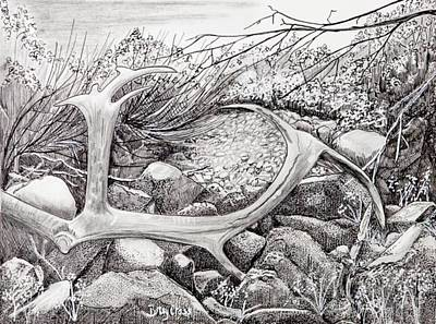 Drawing - Shed Antler by Betsy Carlson Cross