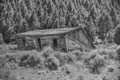 Photograph - Shed In The Woods by Richard J Cassato