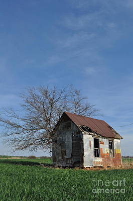 Photograph - Shed2 by Anjanette Douglas