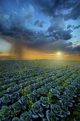 Photograph - Shedding A Little Light by Phil Koch