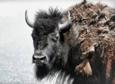 Photograph - Shedding Bison II by Athena Mckinzie